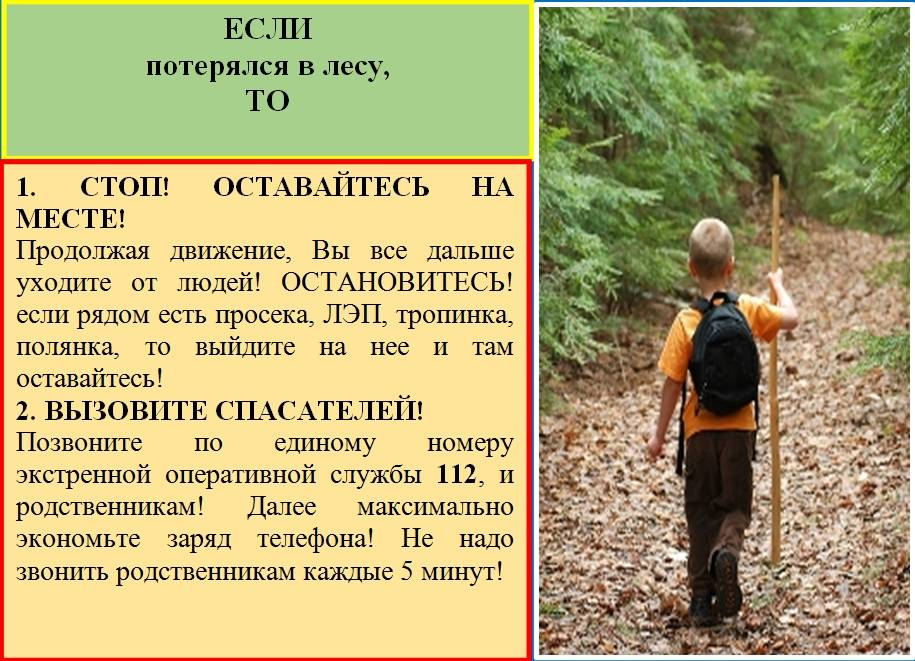 Как вести себя ребенку, который потерялся в лесу? разбираемся вместе с подмосковным экспертом