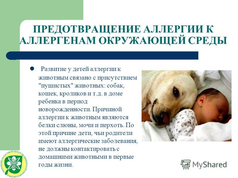 Аллергия на животных и шерсть у детей и взрослых: симптомы и лечение