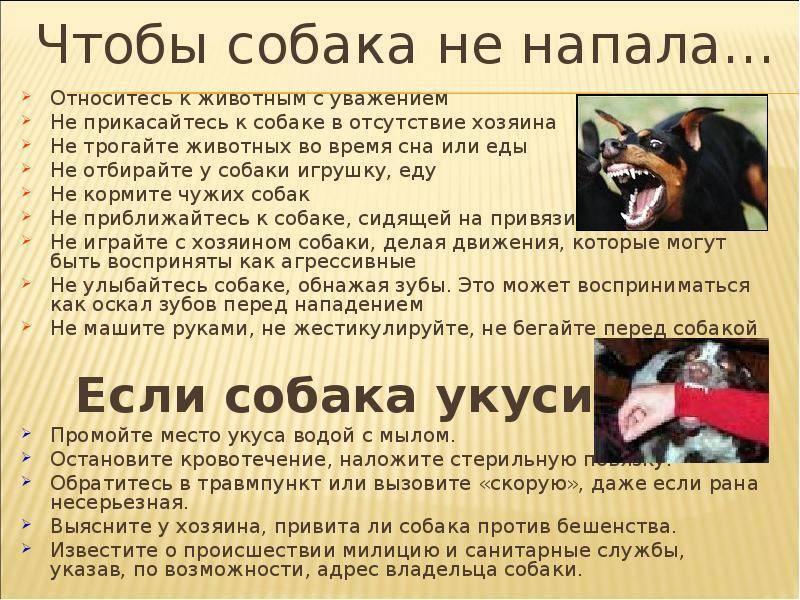 Укусы собак у детей | eurolab | научные статьи