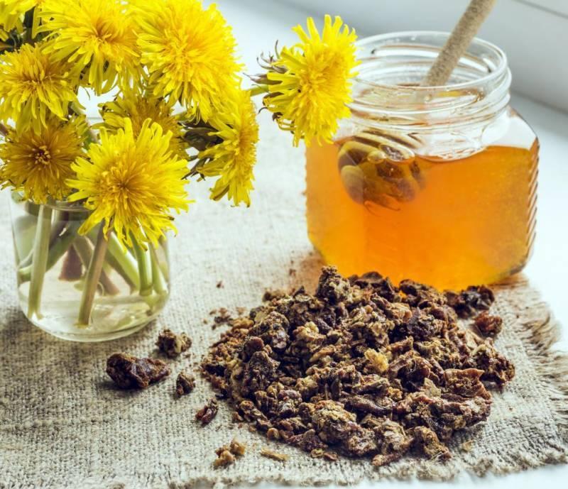 Настойка прополиса — полезные свойства. как приготовить настойку прополиса в домашних условиях на спирту