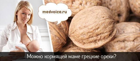 Грецкие орехи: польза и вред для организма   азбука здоровья