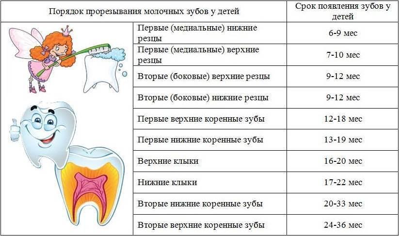 Может ли при прорезывании зубов быть лихорадка? - medical insider