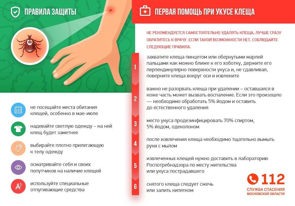 Ребенка укусил клещ: что делать и куда обращаться? | компетентно о здоровье на ilive