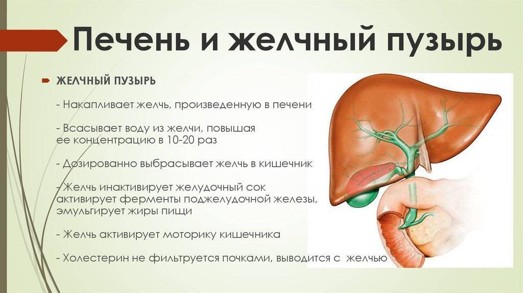 Желчнокаменная болезнь – жкб. микролиты и камни в желчном пузыре: причины, симптомы, диагностика и лечение жкб.