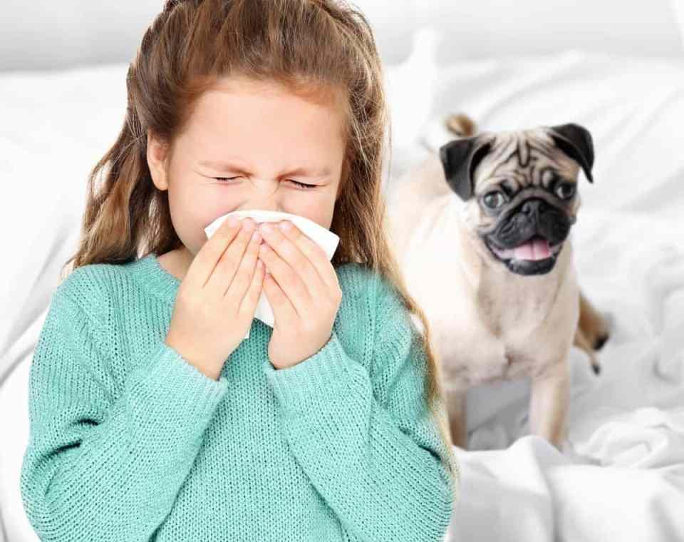 Что делать, если у вас аллергия на домашних животных