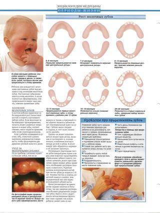 Какие зубы режутся первыми у детей и во сколько, фото, чем помочь ребенку