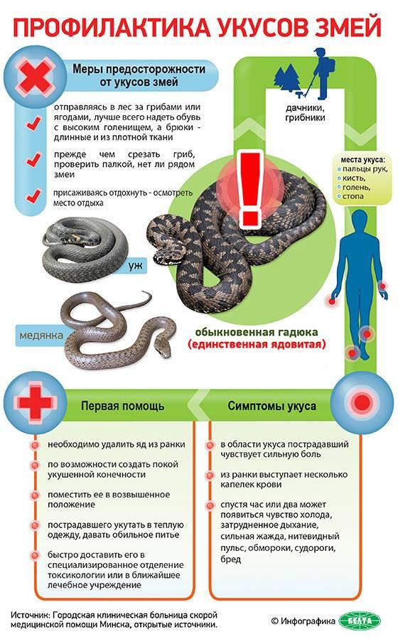 Как оказать первую помощь при укусах змей и насекомых   амо