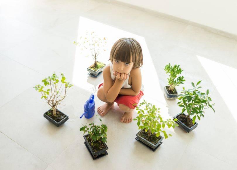 Цветы для детской комнаты: требования к растениям и рейтинг лучших/худших цветов