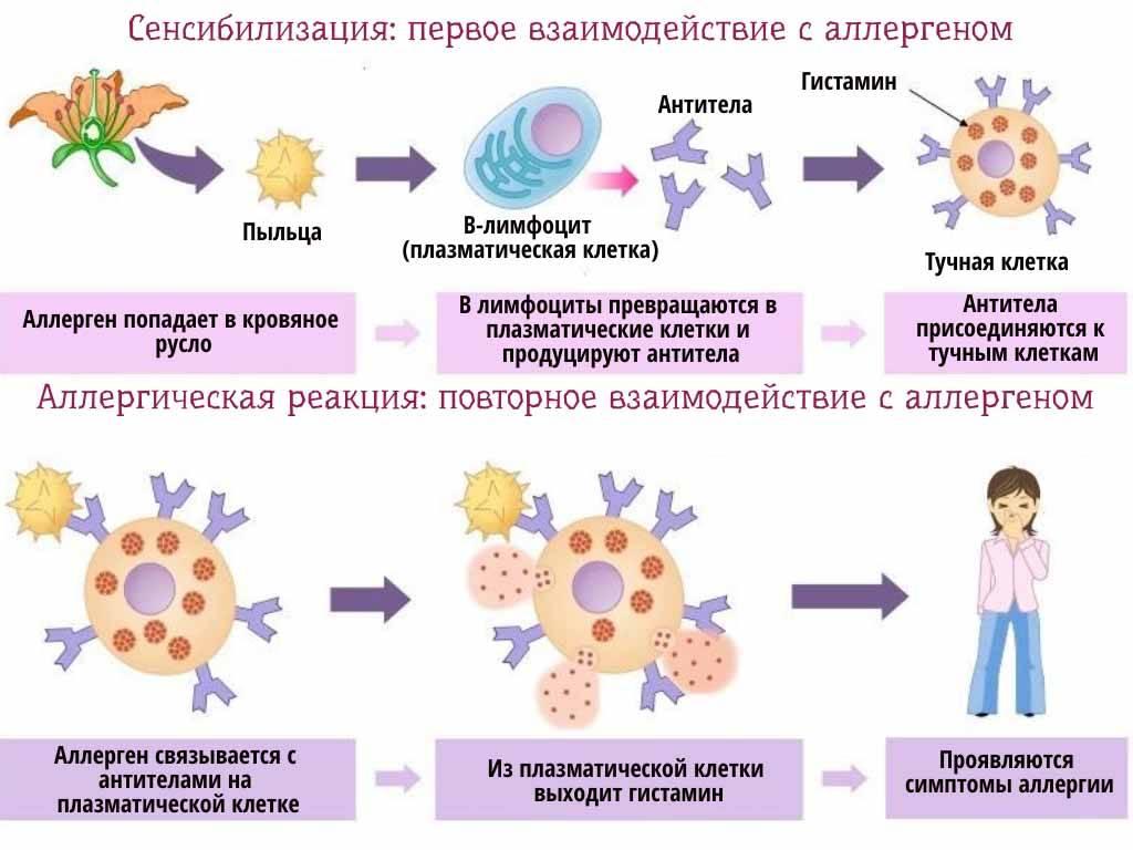 Анализ на аллергены - что нужно знать аллергику