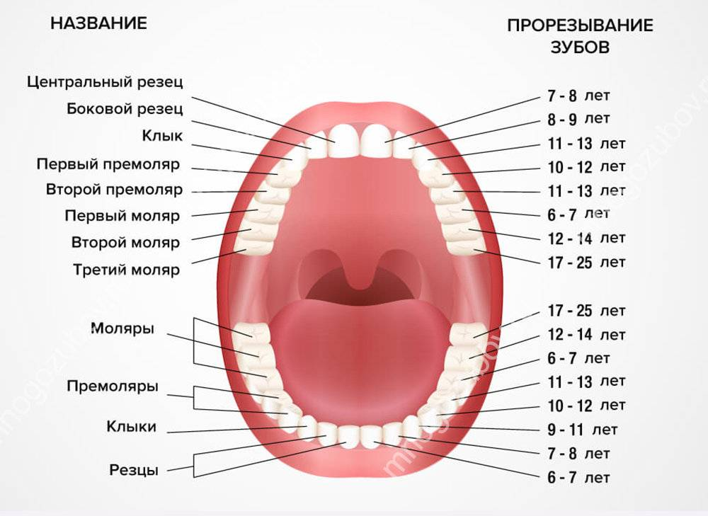Когда выпадают молочные зубы у детей: последовательность и сроки