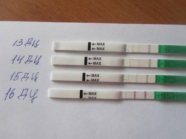 Овуляция при приеме противозачаточных таблеток: когда наступает, происходит ли зачатие после отмены?