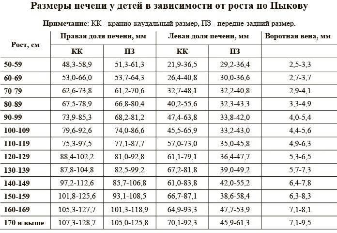 Размеры печени у детей и взрослых: нормальные параметры