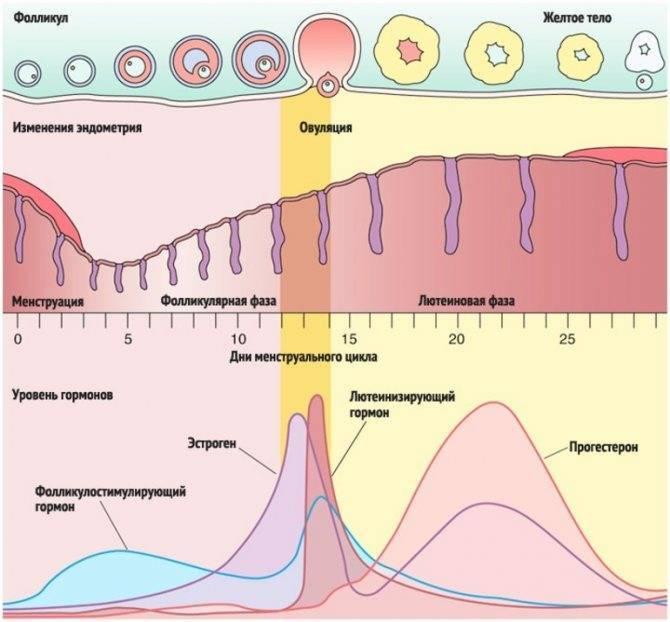Прозрачные выделения у женщин при беременности: причины возникновения
