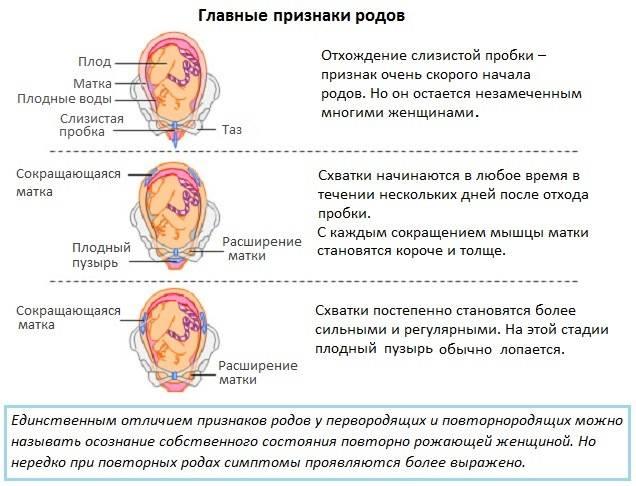 Наблюдение в послеродовом периоде. осложнения и заболевания послеродового периода