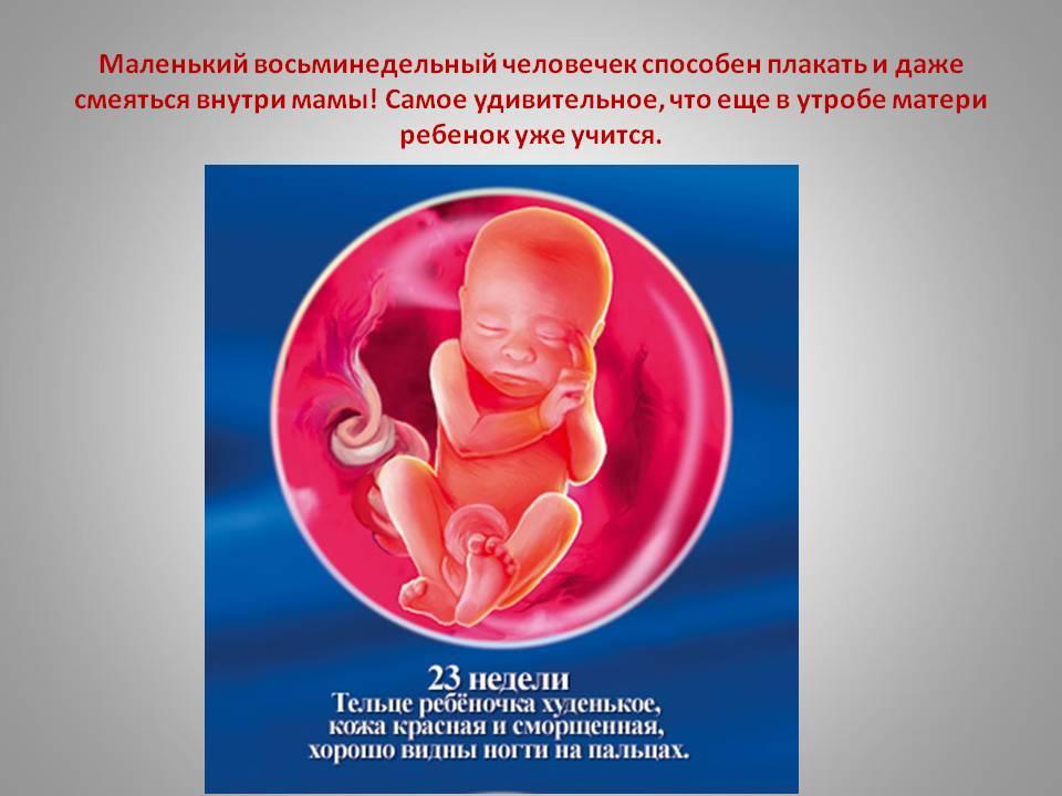 Почему на поздних сроках беременности могут ощущаться щелчки в животе, стоит ли беспокоиться за ребенка?