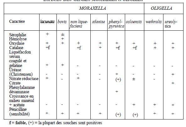Моракселла: свойства, патогенность, симптоматика, диагностика, как лечить