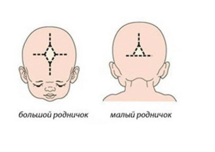 Детский родничок: размеры родничков у детей, сроки, когда зарастает родничок