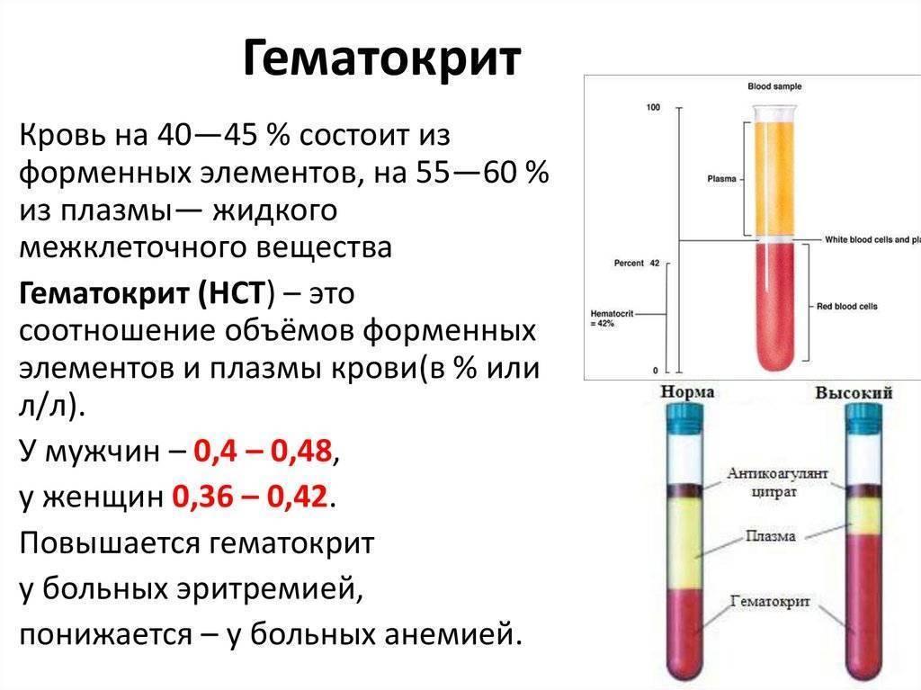 """Пониженный гематокрит в крови: что это значит, причины и лечение низкого гематокрита – гуз """"поликлиника № 18"""""""