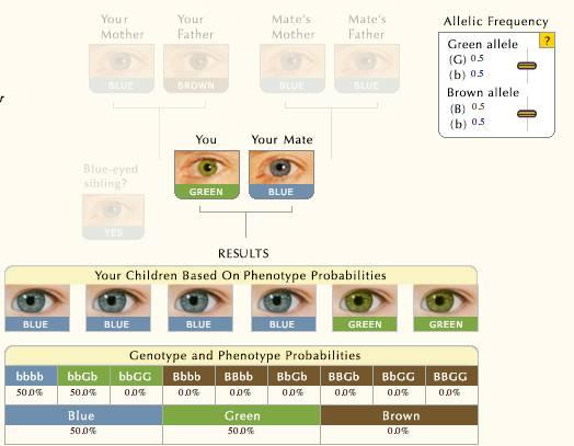Почему глаза разных цветов и что делать? | компетентно о здоровье на ilive
