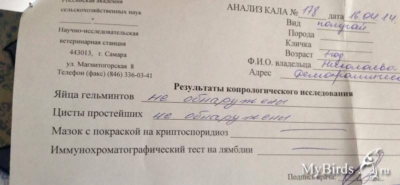 Анализ на энтеробиоз: показания, подготовка, проведение процедуры —  online-diagnos.ru