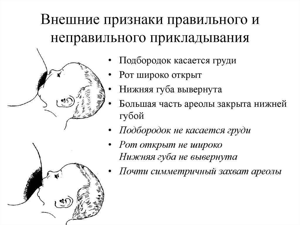 Правила прикладывания ребенка к груди для кормления - топотушки