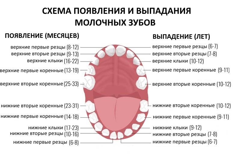 Порядок и схема выпадения молочных зубов у детей: признаки и особенности процесса, очередность и сроки
