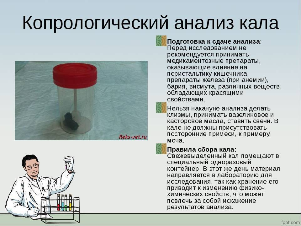 Как правильно собрать кал у грудничка на анализ, нюансы сбора и виды исследований