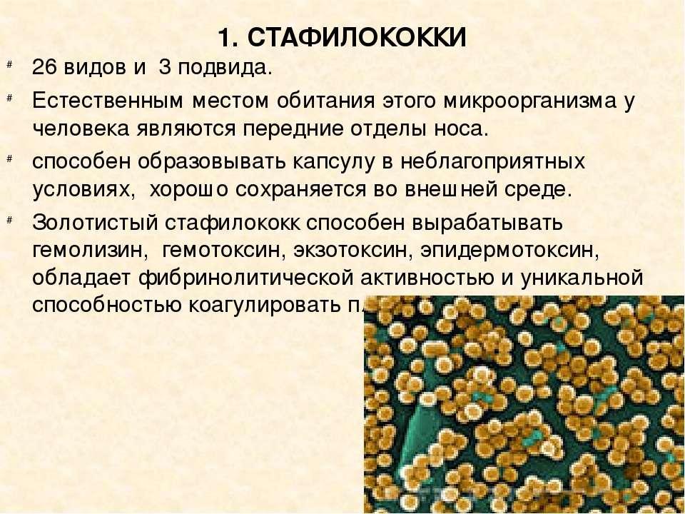 Посев на золотистый стафилококк (s. aureus) с определением чувствительности к антибиотикам, количественно