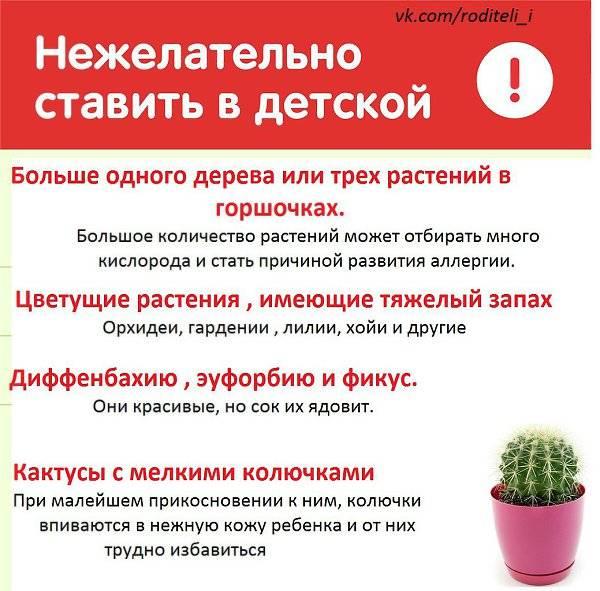 Самые полезные комнатные растения для детской