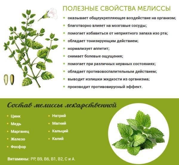 Зеленый чай при кормлении грудью: можно ли пить при лактации кормящей женщине