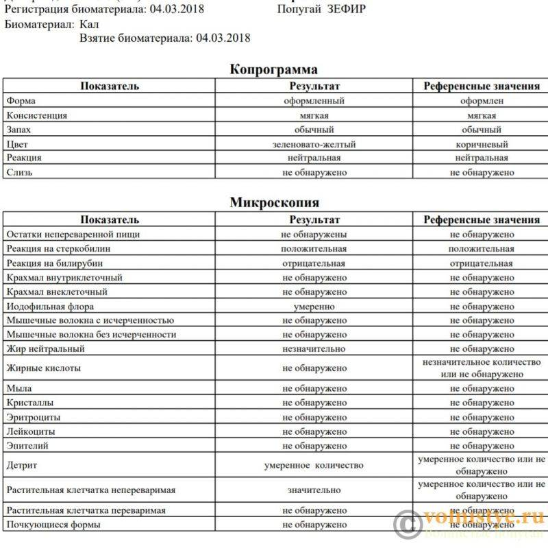 Копрограмма кала: расшифровка у детей, таблица с нормами, сбор материала для анализа