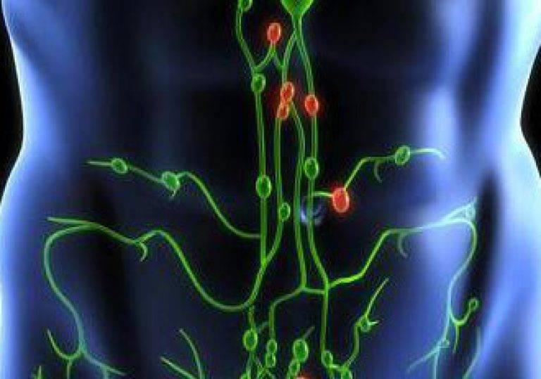 Лимфоузлы. лимфатическая система и ее заболевания и лечение.