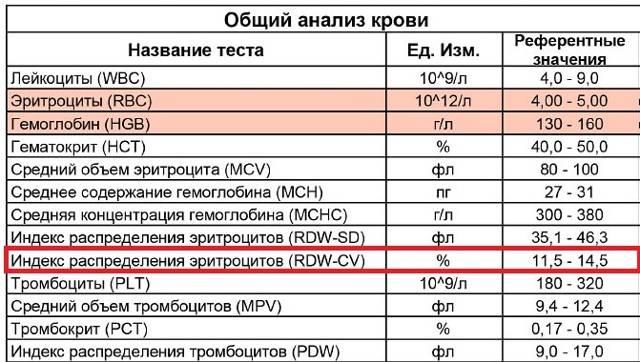 Ширина распределения эритроцитов: норма, повышена, понижена