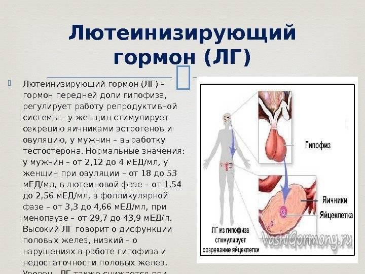 Что такое фолликулостимулирующий гормон (фсг)? нормы и роль в организме женщины