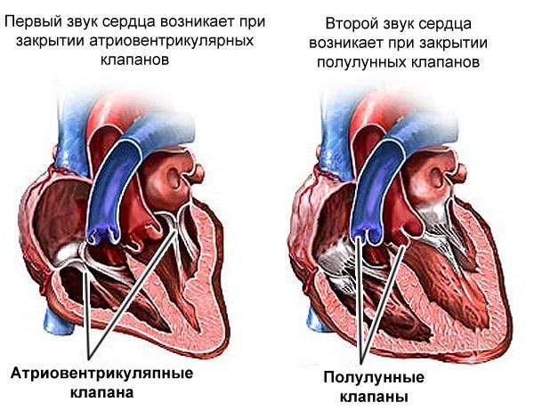 Шум в ушах и голове. причины и лечение шума в ушах