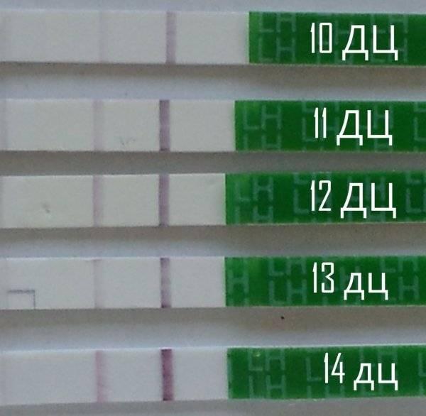 Узи яичников для выявления овуляции. показания и результаты. как проводится? :: polismed.com