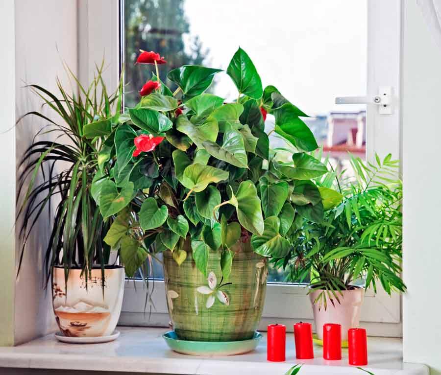 Самые полезные комнатные растения для детской. критерии выбора, описание, фото — ботаничка.ru