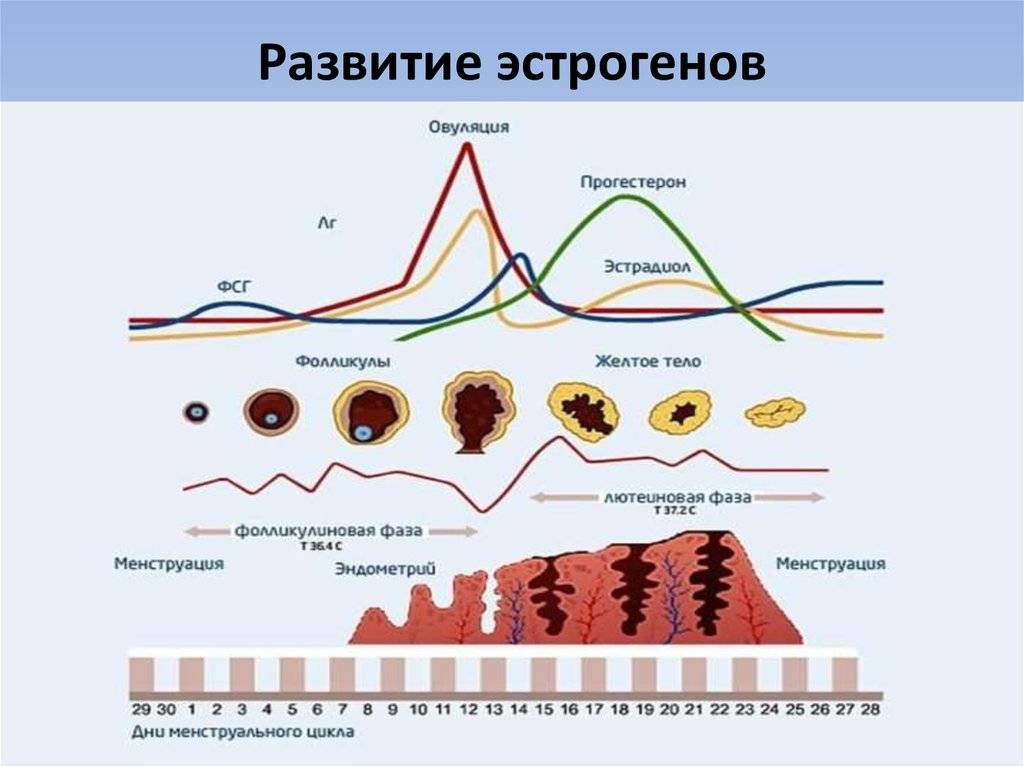 Высокий прогестерон в лютеиновой фазе - причины и снижение