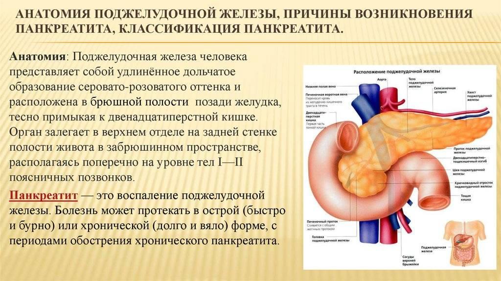 Реактивный панкреатит увзрослых: причины, симптомы итактика лечения болезни