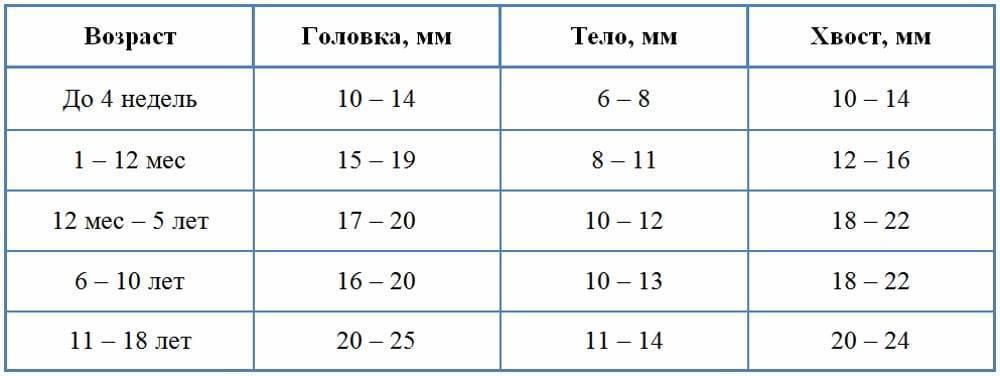 Ультразвуковое исследование селезенки: размеры, норма по узи у взрослых и детей, подготовка к узи