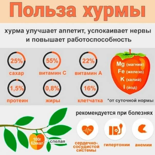 Хурма: калорийность, польза и вред, сорта (+ критерии выбора)