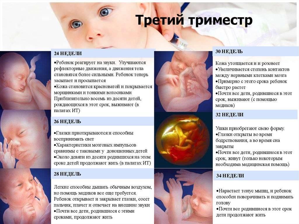 С какой недели плод считается жизнеспособным, и ребенок может выжить при родах?