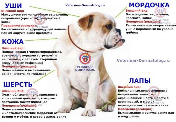 Аллергия на животных | компетентно о здоровье на ilive