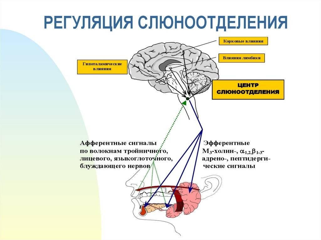 Лечение гиперсаливации у детей (лечение повышенного слюноотделения)