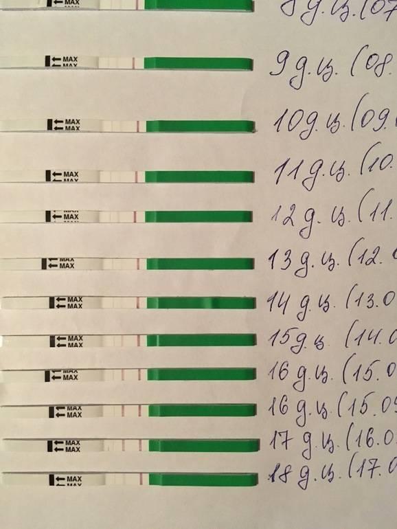 Фолликулометрия — овуляция на узи | университетская клиника