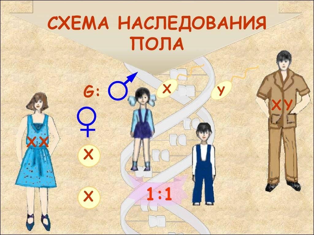 Народные приметы помогут узнать пол ребенка