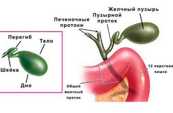 Врождённые аномалии жёлчных путей: причины, симптомы, диагностика, лечение | компетентно о здоровье на ilive