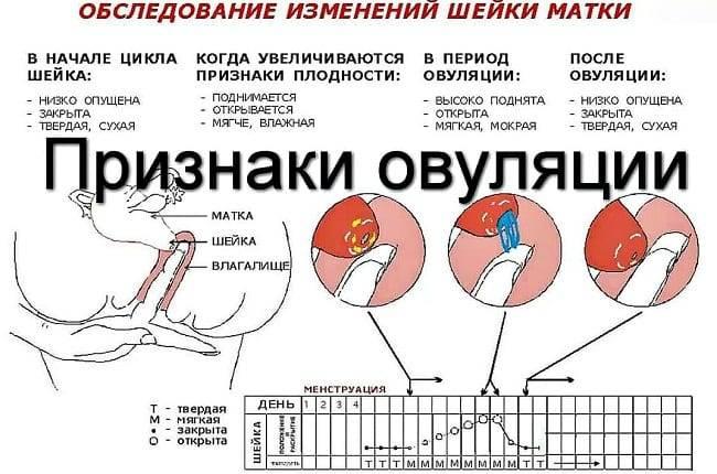 Во время овуляции тошнота и головокружение: о чем говорят эти симптомы в середине цикла?