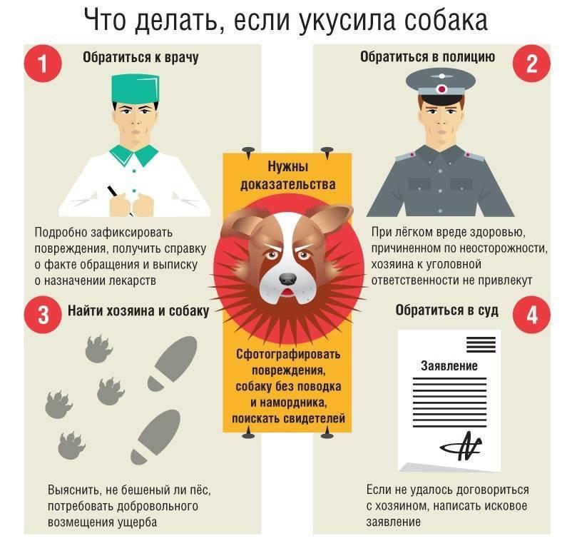Что делать, если укусила домашняя собака: до крови, привитая или нет