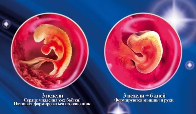 ➤ 3 неделя беременности всё что нужно знать будущей маме